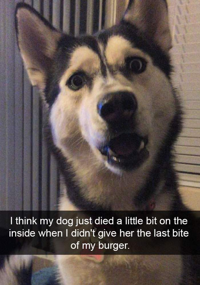 100 Funny Dog Snapchats That are Impawsible Not to Laugh, http://babepup.com/funny-dog-snapchats/  Check more at http://babepup.com/funny-dog-snapchats/