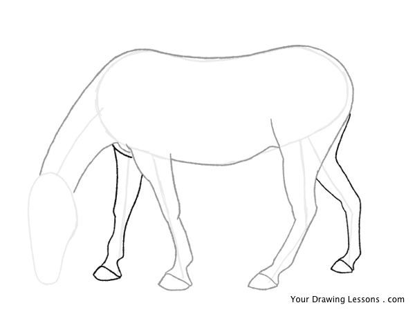 the horse is one of the most demanded animals to learn how to draw description