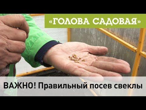 (5) Голова садовая - ВАЖНО! Правильный посев свеклы - YouTube