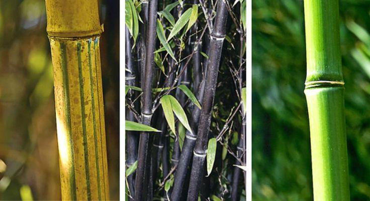 34 besten bambus bilder auf pinterest bambus garten. Black Bedroom Furniture Sets. Home Design Ideas