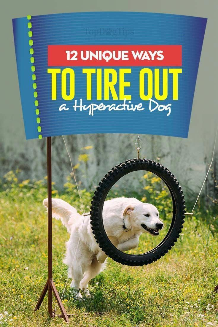 12 Unique Ways To Tire Out A Hyperactive Dog Dog Training Tips