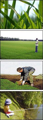 Füvesítés akár gyepszőnyeg segítségével is.  http://www.globalgarden.hu/szolgaltatasaink/fuvesites-igeny-szerint-gyepszonyegfektetes/
