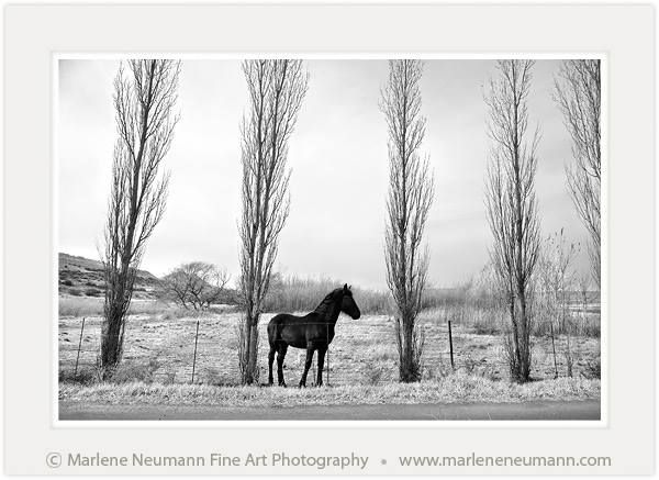 """A Winter Morning"" - Black and White Fine Art Photography by South African Master Photographer Marlene Neumann - www.marleneneumann.com - E-mail: neumann@worldonline.co.za"