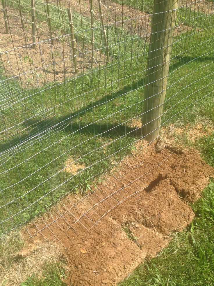 The locals told me this is the best way to keep out ground hogs and rabbits...day 7