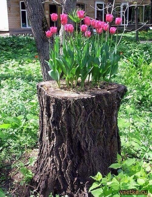 suche hilfe im garten gallerie bild oder dafdcdacdadda tree stem tree planters