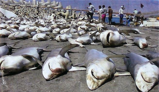 animales maltratados tiburones - Buscar con Google