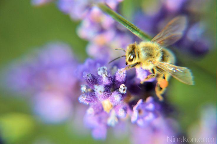 und einen Himmel in einer Wildblume, die Unendlichkeit in einer Hand zu halten und die Ewigkeit in einer Stunde. – William Blake Hier ein paar Aufna…