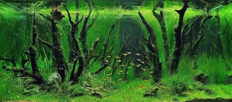 Akvarist Günlüğü