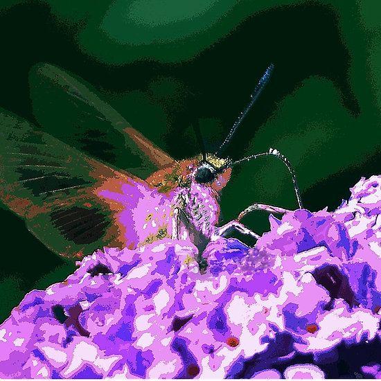 Papillons Sphinx  - Butterflies  PAINT  04 (c)(h)  Kodak z1285  by Olao-Olavia / Okaio Créations 2013