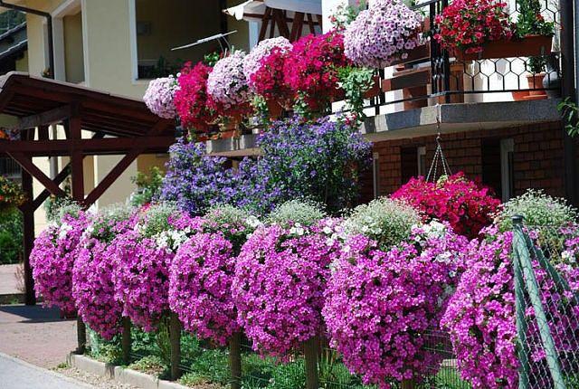 Güzel bahçeler.
