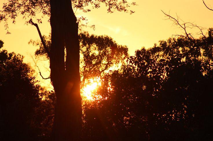 Soloppgang over Okawango