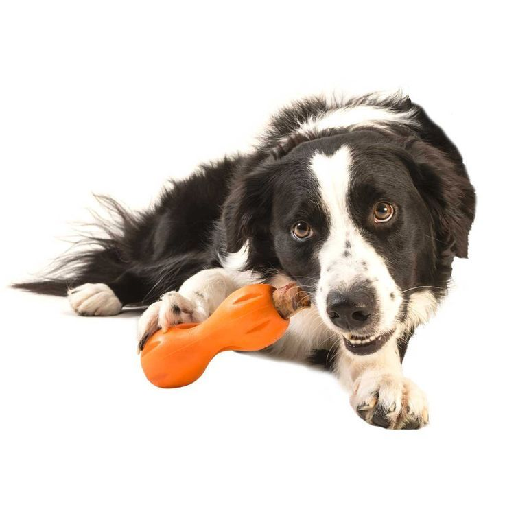 Tired Of Your Pup Devouring Expensive Dog Treats In Seconds West