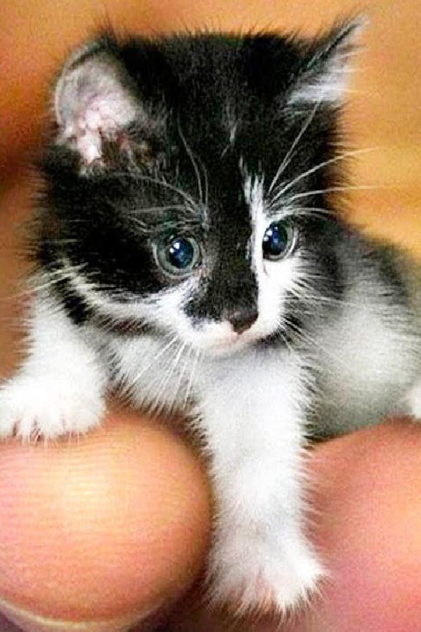 5485f54ac9 THE SMALLEST CATS In The World Gatitos, Lentes, Dulces, Los Bigotes Del Gato