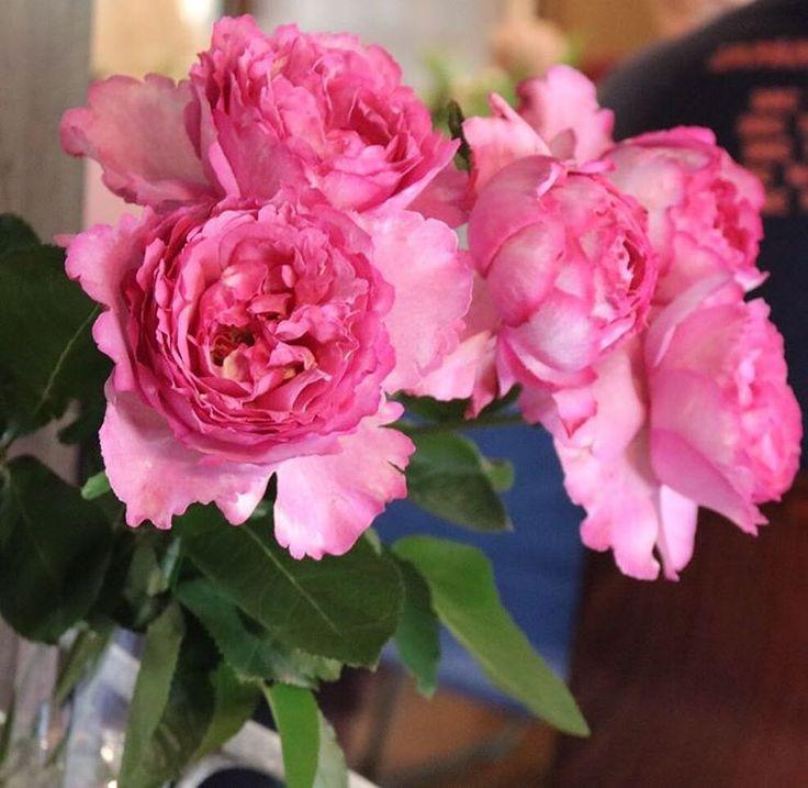 roses -yves piaget- #flowers #display #rose #pink  #flowerdesign #flowerstagram #flowerslovers #wedding #weddingflowers #love #like4like #elegance #natural #lovely  #クラシック #フラワー #フラワーデザイン #花 #ディスプレイ #フラワーアレンジメント #フラワーギフト #ウェディング #ウェディングフラワー #ウェディングフォト #バラ #福岡 #福岡前撮り #atelier_ruban http://gelinshop.com/ipost/1522907386170692620/?code=BUidDLyhdQM