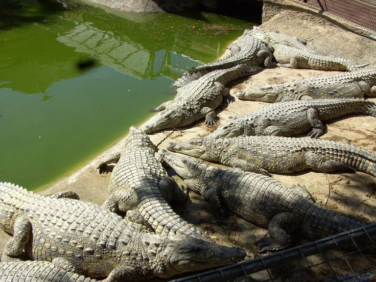 1000 images about off topic travel on pinterest dubai for Aquarium torremolinos