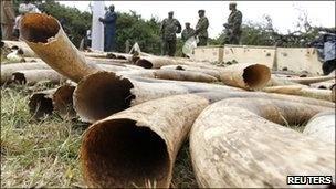 """wildlife rangers have shot dead five suspected ivory poachers during a gun battle in western Kenya""  get it get it rangers!"