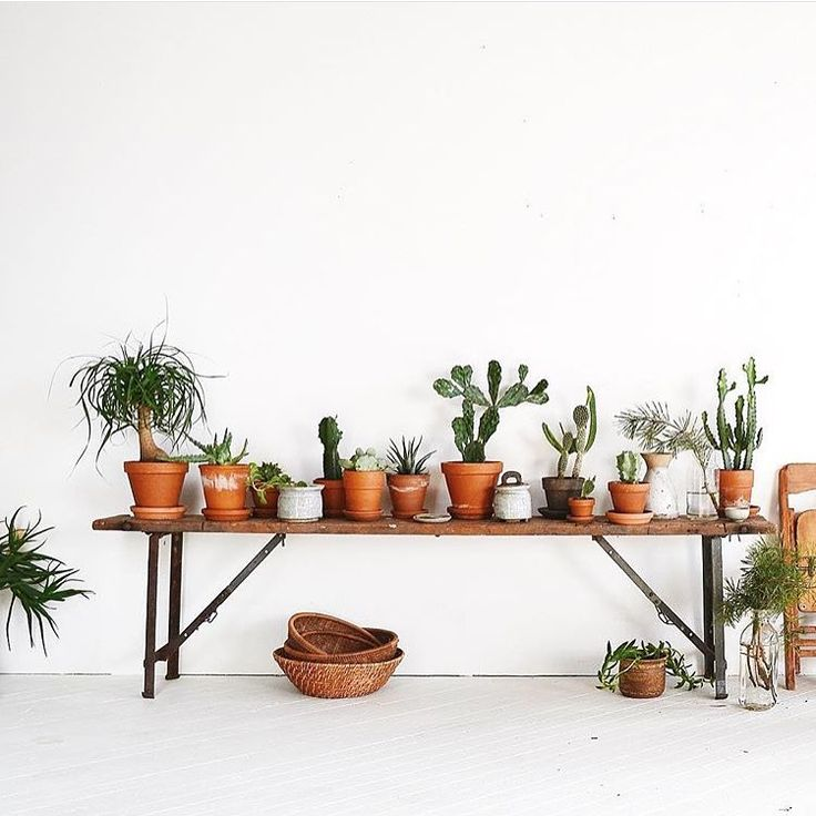 """""""Oh hey @thewhiitehouse -- we love your earthy boho #jungalowstyle   plants, succulents, tropicals, cactus, terra cotta planters"""