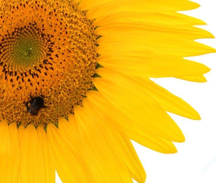 yellow plus bee