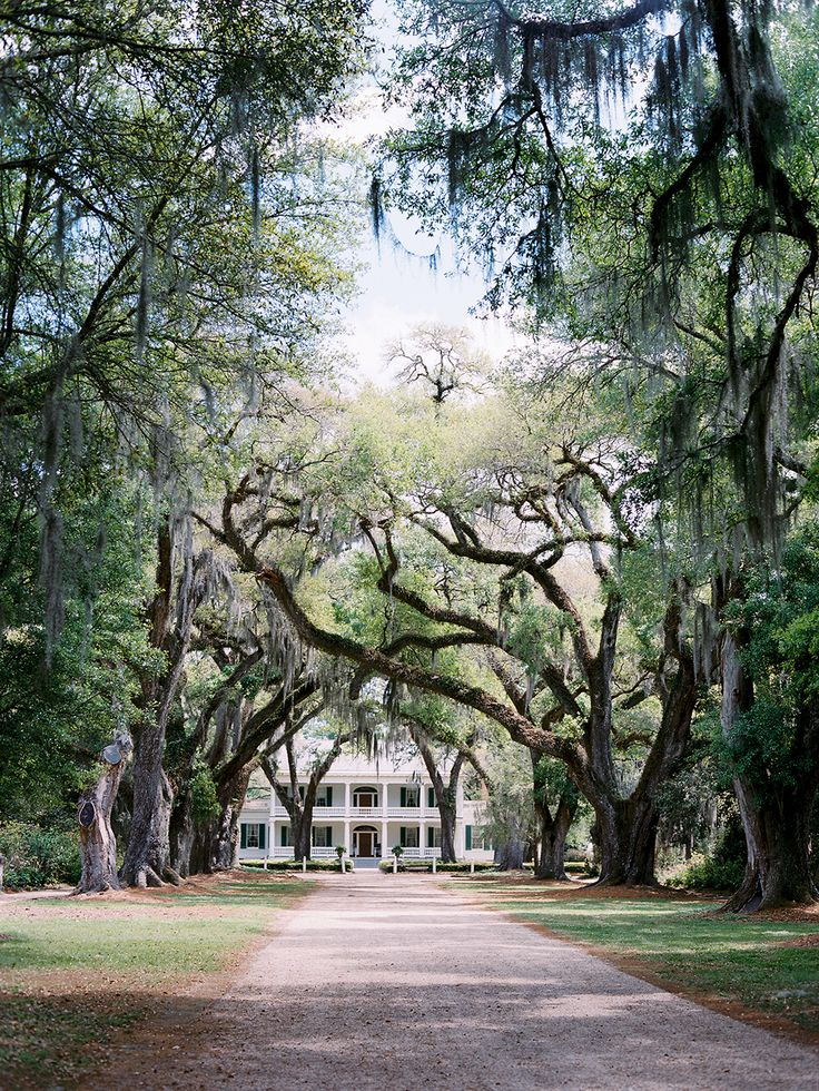 Spanish moss and southern home