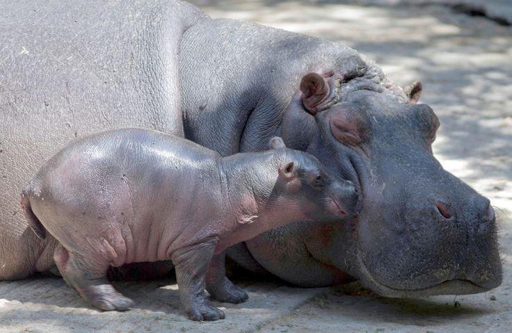 Crías de animales con sus mamás