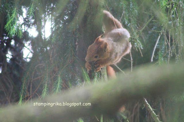 stamping rika: squirrel