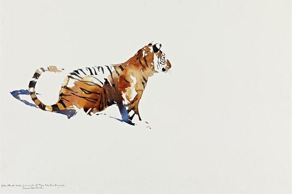 Darren Woodhead ~Tiger cub study  http://www.darrenwoodhead.com/default.asp?page=gallery