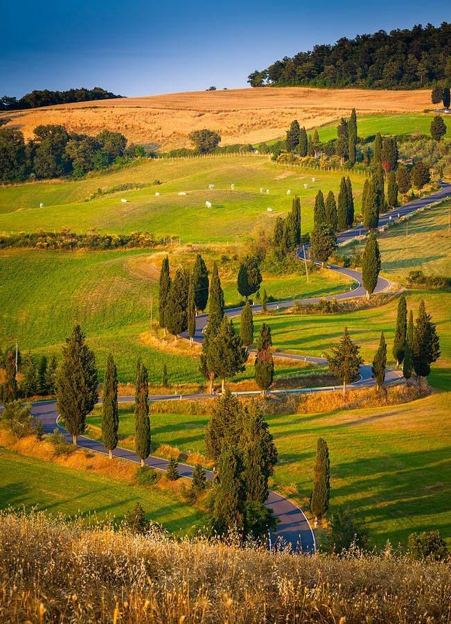 Beautiful cypress lined road in Tuscany to make you dream of visiting soon