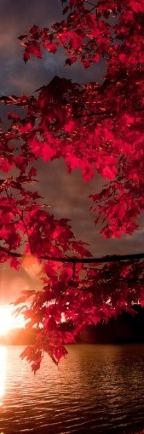 Gorgeous Fall Sunset red leaves lake