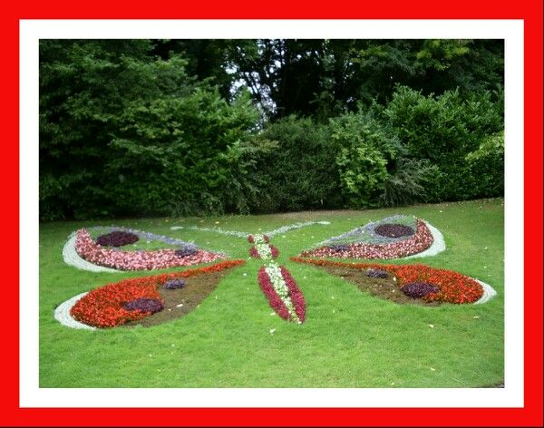 Butterfly made out of flowers.