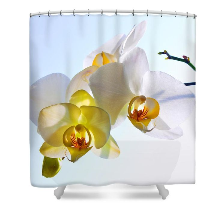 ORCHID WITH SKY BACKGROUND by VICTOR KOVCHIN.   Belong to the Galery Russian Artists New Wave  Elegant and beautiful white orchid against the light blue sky. #RussianArtistsNewWave #Orchid #FlowerArt #VictorKovchin #WhiteOrchid #Garden#Flowers #White #InteriorDesign #HomeDecor #Canvas #FramedPrints #AcrylicPrints #FloralDesign #Tropical #Bathroom #BathroomIdeas #ShowerCurtains