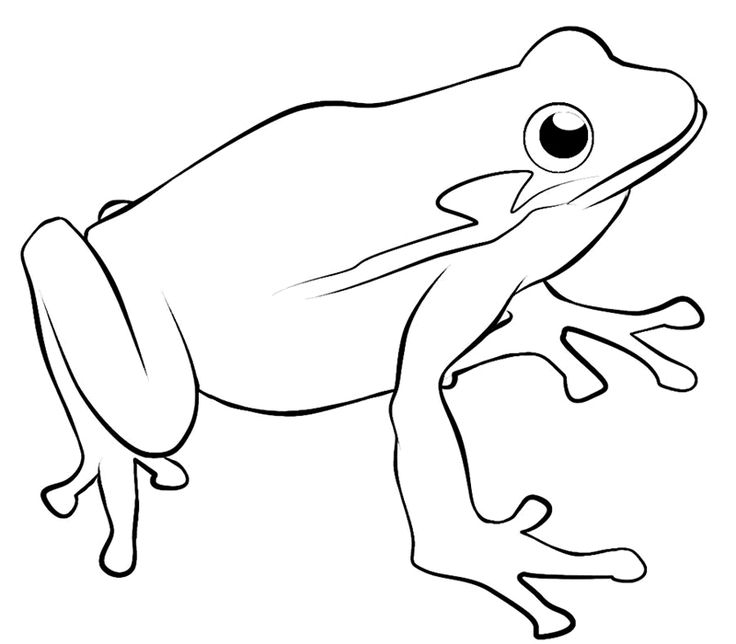 42 best Frog Coloring Sheets images on Pinterest | Frog coloring ...