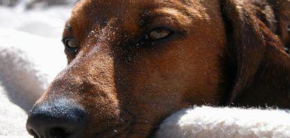 Remedios caseros para eliminar el olor a orina de perro | eHow en Español