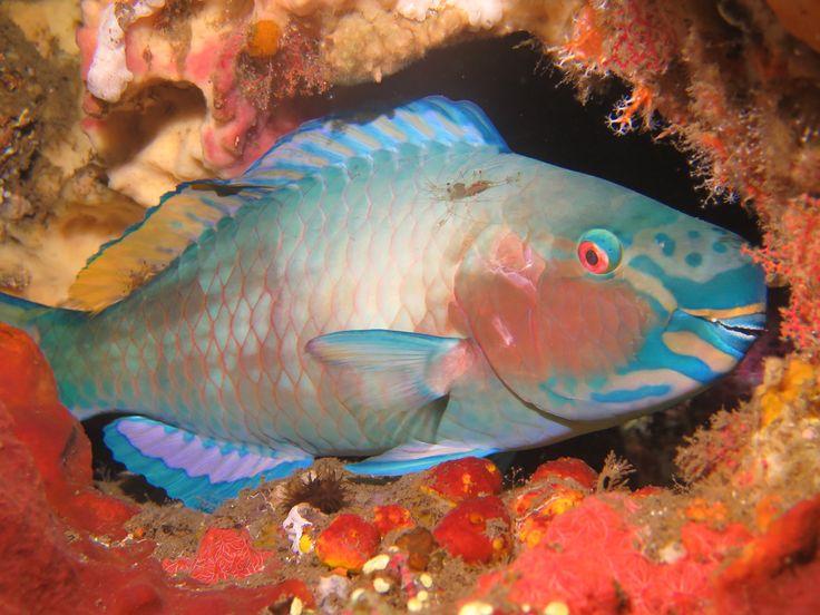 Dive in Bali and stay at Villa Tengguli www.villatengguli.com