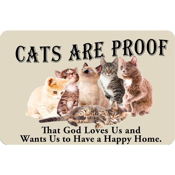Printed Cats are Proof 17.5 in. x 26.5 in. Pet Mat, Multicolor