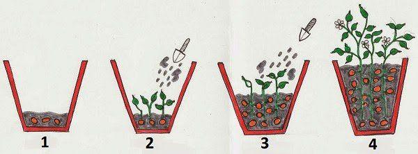 Cómo crecer 100 libras de papas en un barril