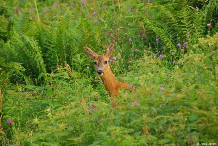 Sguardi nel bosco.  Per gentile concessione dell'amico © Denis Lunardi