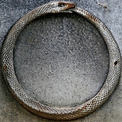 """melancholiceuphoria:  """"The alchemists, who in their own way knew more about the nature of the individuation process than we moderns do, expressed this paradox through the symbol of the Ouroboros, the snake that eats its own tail. The Ouroboros has been said to have a meaning of infinity or wholeness. In the age-old image of the Ouroboros lies the thought of devouring oneself and turning oneself into a circulatory process"""
