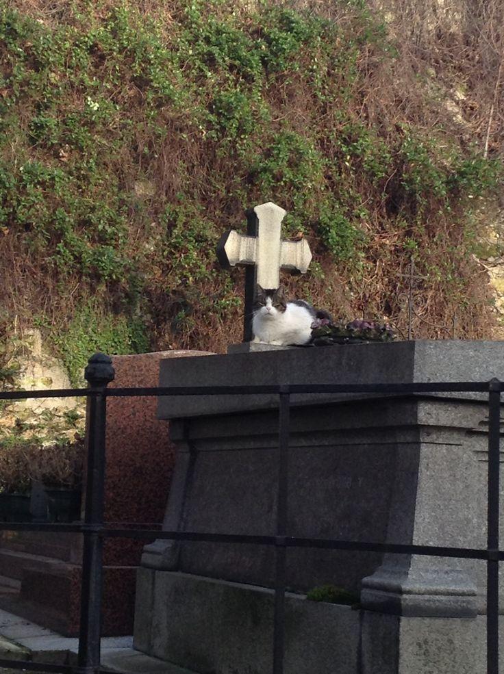 Cat on grave at Montmartre cemetery Paris