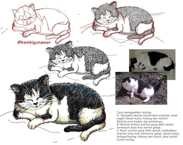 "Step by step how to draw @feniafelicia lovely cat ""BIAS"" #fettekatze #bigcat #leechat #cat #katze #kucing #miau #catlover @cats_of_instagram #doodles #doodle #doodling #sketsa #sketch #gambar #drawing #고향이 #고향이좋다 #masbe #mas_be #masbambi #bambibambanggunawan #karakterunyu #Unyu2 #unyu_korea #cutedrawing #cute #howtodraw #catsofinstagram #cats #karyamasbambi #cartoon"