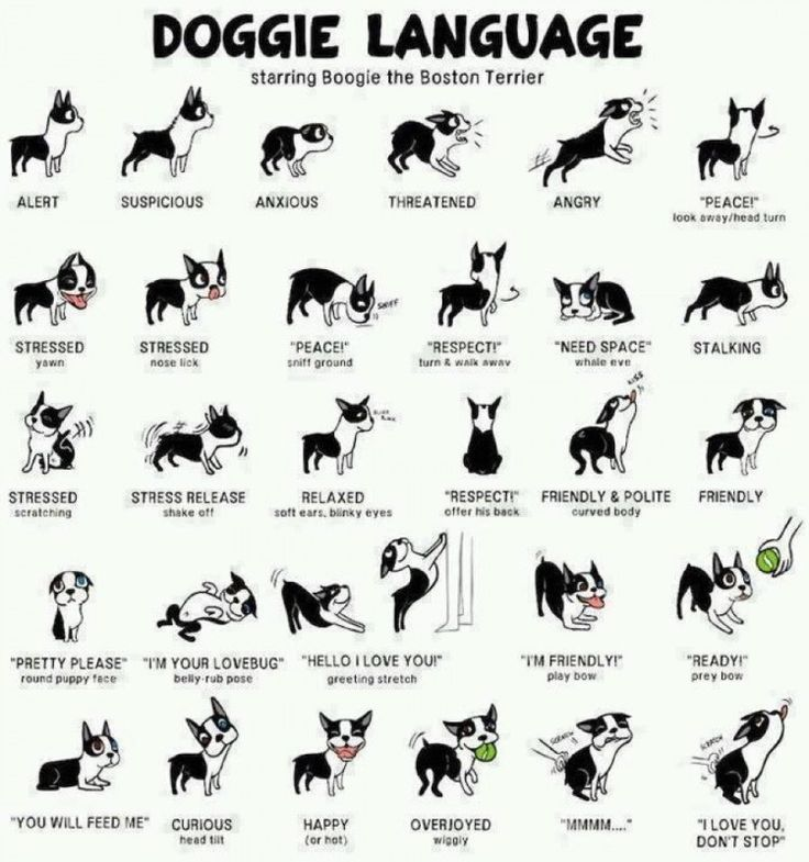how to read your dog u2019s body language