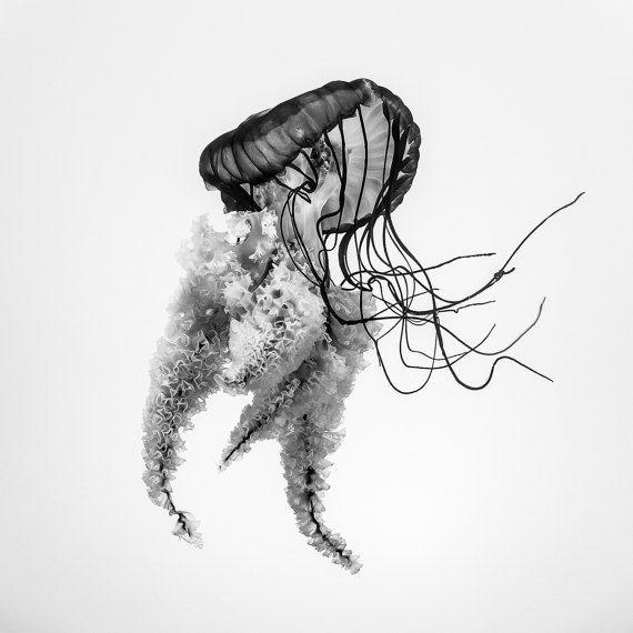 Jellyfish wall art art prints impresiones por Chachaprints en Etsy