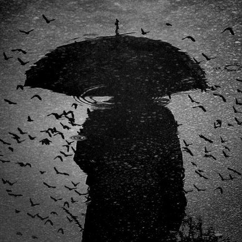 birds, rain, reflections, unknown photographer