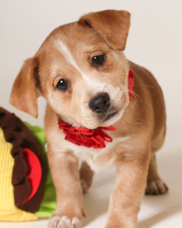 Meet The Newest Bark And Roll Friends At Https Www Adoptapet Com