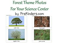 forest theme and loads of activity ideas!