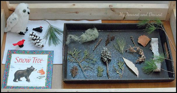 Winter Nature Table. A lovely way to connect children with nature and expand on their understanding of what happens to plants and animals in winter.