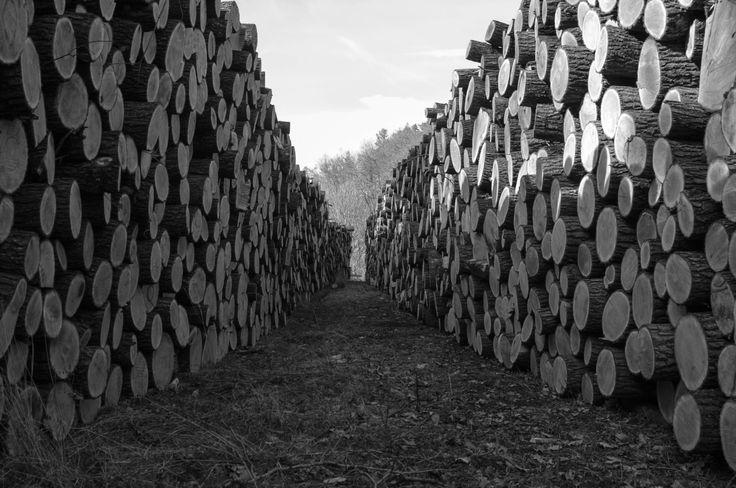 Drewno ułożone w lesie. Pogórze Wałbrzyskie, Dolina Czyżynki.