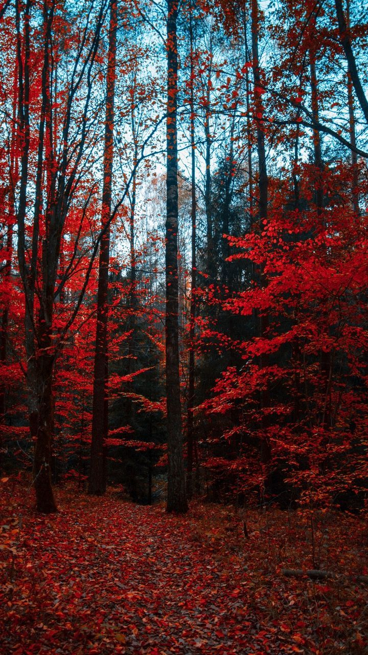 720x1280 Wallpaper Autumn Forest Trees Foliage Autumn Colors Autumn Leaves Wallpaper Forest Photography Beautiful Forest