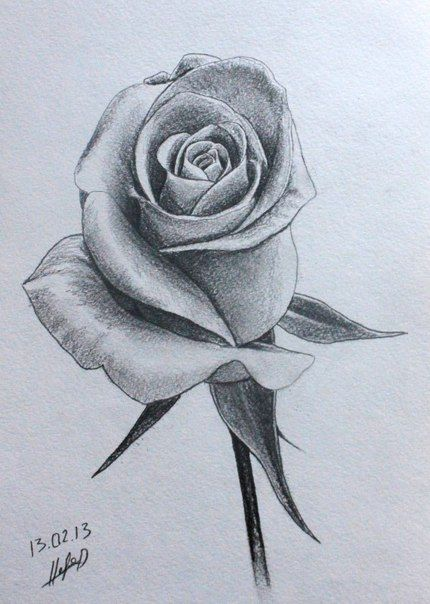 Rosen bleistiftzeichnung  102 besten 솜ㅛ Bilder auf Pinterest | Drawing ...