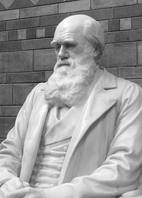 a biography of charles robert darwin the father of evolution Newly discovered letters once again show that darwin was a  when william  erasmus darwin was born in december 1839, his father charles  an intriguing  side to the founding father of evolution: darwin as a family man.