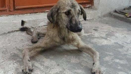 Türkiyede artık cidi anlamda hayvanların koruma altına alınmasını İstiyorum . Belediye Barınakları rezil halde Köpekler sefilik ve hastalıktan ölüyorlar. Sokaktaki köpekler aç hasta ve madur durumda. Bölge bölge sokak köpekleri toplanıpta belediyenin barınak görevlilerin 100 de 98i çalışmayan...